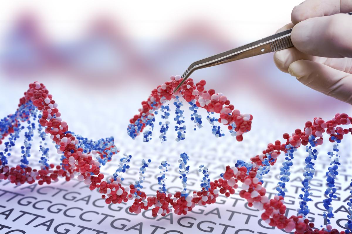 CRISPR es una tecnología de edición de genes que permite a los científicos alterar con precisión una región de la secuencia de ADN. Los científicos de este estudio utilizaron CRISPR para silenciar ambas copias del gen del Huntington, lo que mejoró los síntomas en modelos de ratones con EH.
